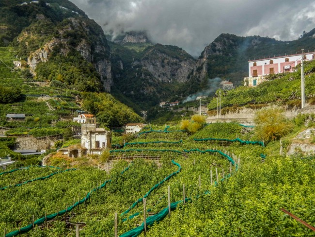 Champs de citronniers - Production de limoncello - Trek en Italie