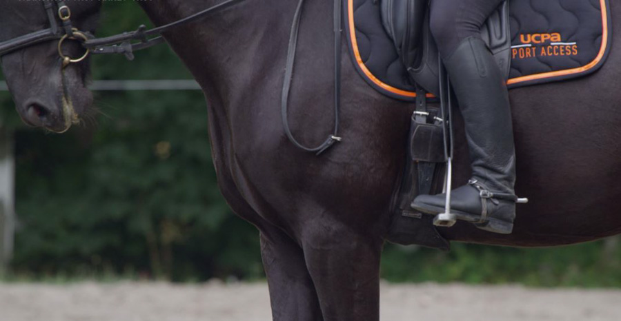 Equitation - Transitions trot-arrêt-trot - pression mollets
