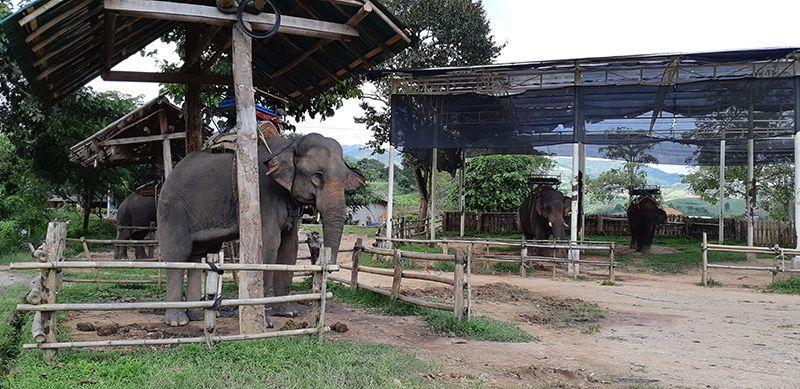 Thailande - The Karens Elephants Tour Raummit dans le parc national Luana Kok.jpg