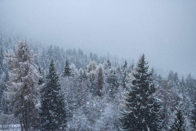 Paradiski skier entre les sapins.jpg