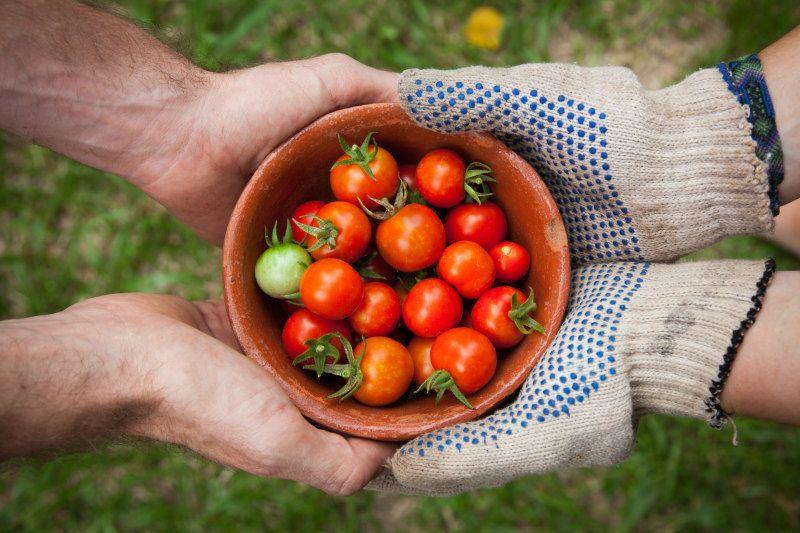 jobs-agricoles-fruits-unsplash